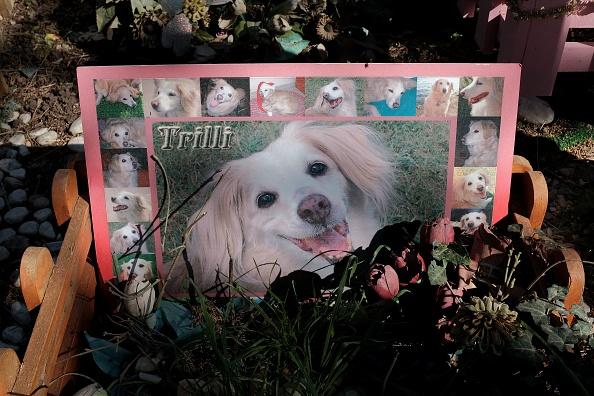 Cementerio de mascota