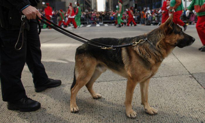 Imagen de archivo de un perro policía. (Kena Betancur/Getty Images)