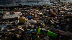 Basura y plástico flotando en el mar Caribe revelan los severos daños a este paraíso