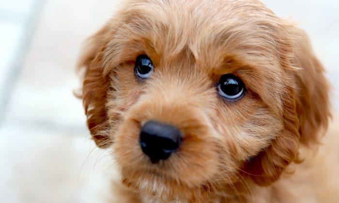 Foto ilustrativa de un perro. (miaanderson/Unsplash)