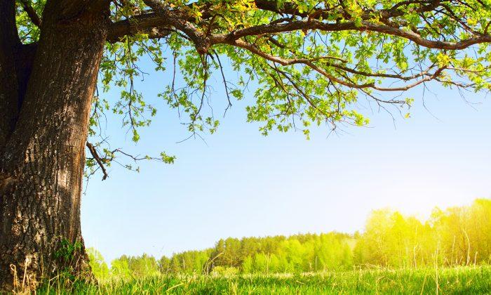Imagen ilustrativa. (Illustration - Shutterstock)
