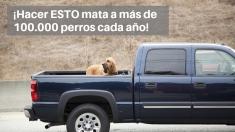 Deja de poner a tus perros en la caja de tu camioneta, más de 100.000 perros mueren cada año por eso