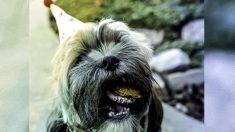 Albergue para perros con enfermedades terminales da amor, helado y bistec a perros en sus últimos días