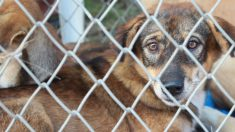 Liberan 85 perritos de mercado de carne de perros en Corea del Sur. ¡Finalmente es clausurado!