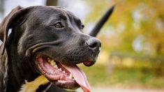 """Cientos de personas lucharon para salvar a este perro del """"infierno"""" cuando nadie lo quería"""