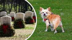 Video: Perro con el corazón roto visita a la tumba de su dueña anterior y se niega a irse del lugar