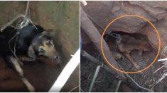 Perritos cayeron en pozo de 10 metros y luego de 3 días sobreviven a un rescate estremecedor