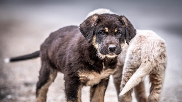 Perros callejeros salvan la vida de una bebé prematura que tiraron al desagüe