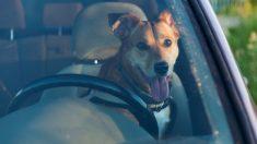 Policía rompe la ventana para salvar a un perro en un auto hirviendo, pero los dueños no están contentos