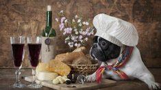 Chef de gran corazón alimenta perritos callejeros con las sobras de los banquetes de un lujoso hotel
