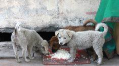 Joven brasilero se cansa de ver perros hambrientos y abre un restaurante exclusivo para ellos