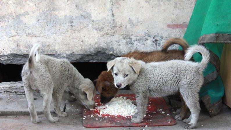 Los perritos vagabundos con hambre y sed pueden alimentarse en un restaurante canino que funciona las 24 horas del día gracias a un compasivo joven brasileño. Imagen ilustrativa. (Crédito: Pixabay / Kenky)