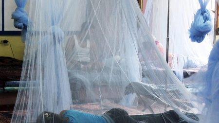 Aumenta a 89 los muertos por dengue hemorrágico en Honduras