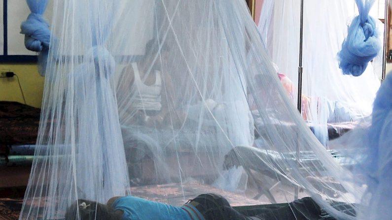 El 80 % de los fallecidos y el mayor número de infectados por dengue se concentran en los departamentos de Cortés, Yoro, Atlántida y Santa Bárbara, en el norte y occidente hondureño. EFE/Gustavo Amador/Archivo