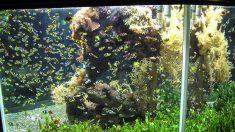 Madre se envenena con mortal toxina al limpiar su acuario y sus 3 hijas quedan en cuarentena