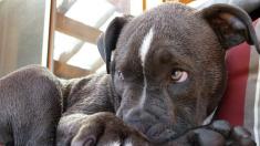 Desechan a un perro desnutrido como si fuera basura y ofrecen USD 10.000 para dar con el responsable