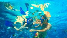 Buceador improvisa ante un tiburón que viene a atacarlo mientras filma una tortuga