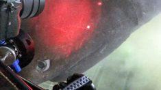 Video de las profundidades marinas muestra un encuentro cercano con un tiburón de más de 1 tonelada