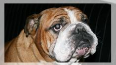 Veterinario adopta un perrito con incontinencia porque su familia ya no lo quería