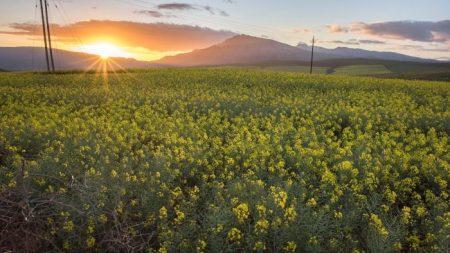 Naciones Unidas engaña sobre la producción de alimentos y el cambio climático