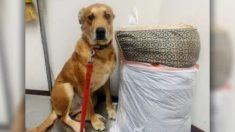 Cachorro é abandonado em abrigo com sua cama e brinquedos porque sua família não tinha tempo para ele