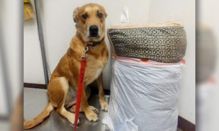 (Facebook | MCACC West Adoptable Dogs)