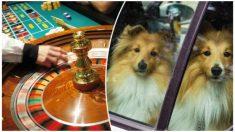 Encierra a 3 perritos en su auto caliente mientras juega 10 horas en el casino: negligencia fatal