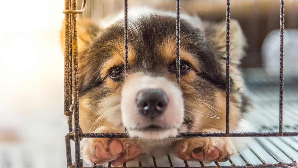 perro-jaula