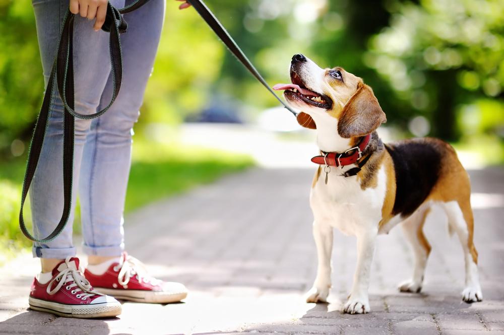 perro-parque