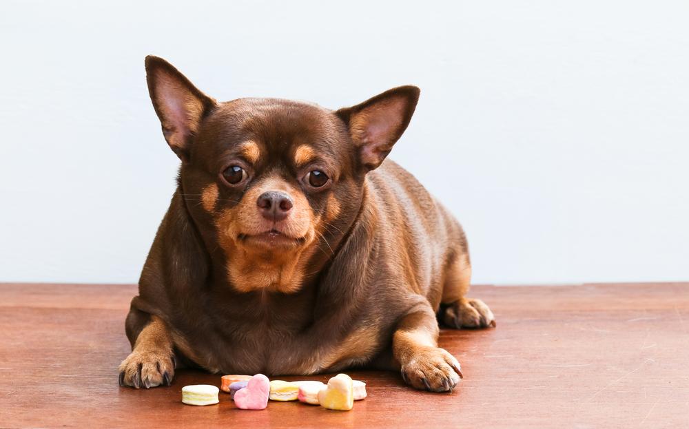 perro-dulces