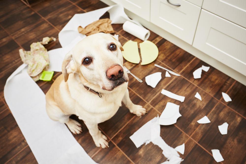 perro-platos-rotos