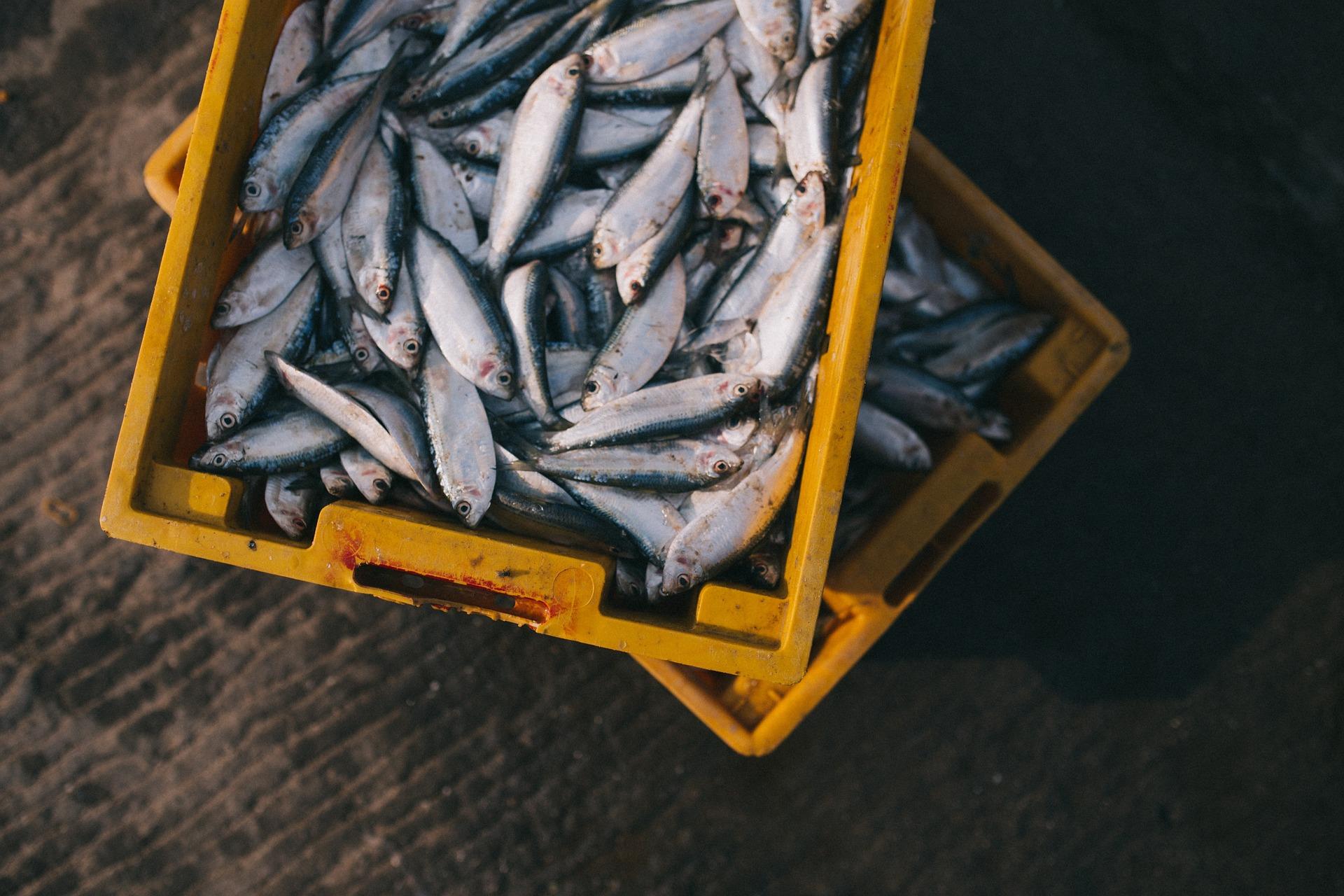 mariscos, pescados contaminados