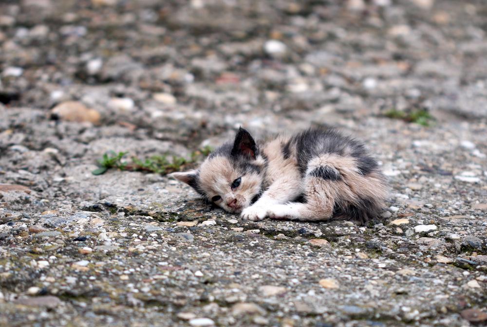 gato callejero, maltratado