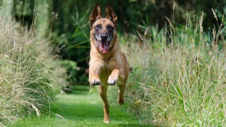 Perro del ejército rescata a un hombre que fue enterrado vivo por un desprendimiento de tierra