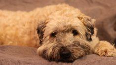 Perro en un refugio muere el mismo día que su dueña separada de él en un asilo