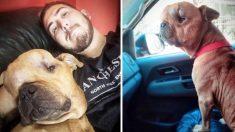 Argentino adopta a un perrito con enorme tumor en la cabeza y le da amor incondicional en sus últimos días