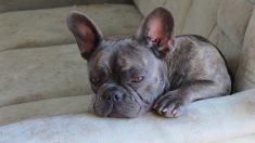 Un perro muere 15 minutos luego que su joven dueño fallece de cáncer