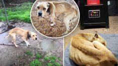"""Descarado dueño nombra a su perro """"Bad Dog"""", lo deja encadenado y al aire libre durante 5 años"""