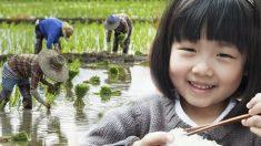 """Palabras de sabiduría: """"hablar"""" con un grano de arroz convence a una niña de no desperdiciar comida"""