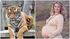 Tigre se acerca al vientre de una mujer embarazada y el curioso momento es captado en video