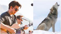 Músicos escuchan un escalofriante coro de lobos unirse a ellos mientras grababan en un bosque