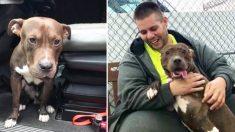 Chofer de un camión recorre 4.500 kilómetros para adoptar a un pitbull y evitar que sea sacrificado