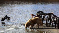 Llevó a sus tres perros a jugar en una laguna del vecindario y horas después murieron
