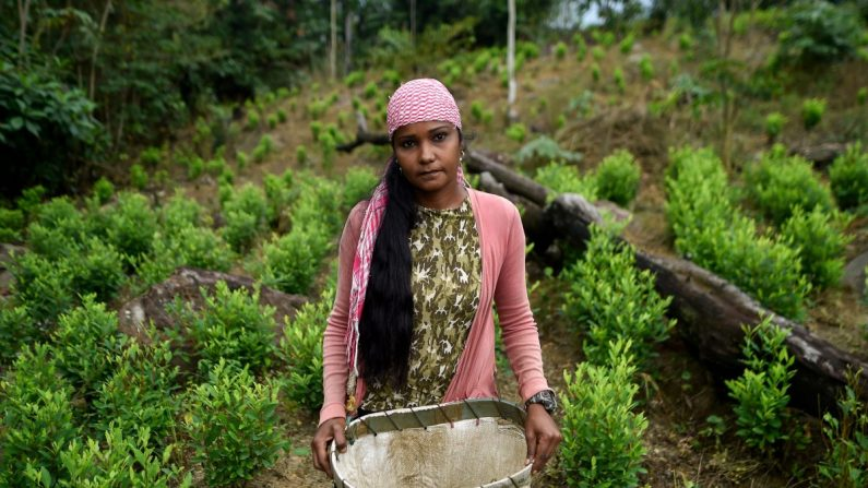 """Una migrante venezolana que trabaja como """"Raspachin"""" (agricultor recolector de hojas de coca), en una plantación de coca en Catatumbo, Colombia, el 9 de febrero de 2019. (Luis Robayo/AFP/Getty Images)"""