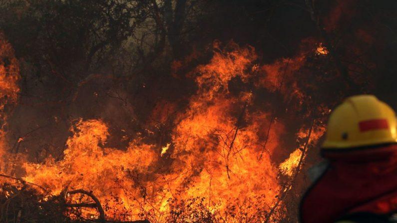 Un bombero trabaja durante un incendio forestal cerca de Robore, región de Santa Cruz, este de Bolivia el 22 de agosto de 2019. Hasta la fecha, los incendios forestales en Bolivia han devastado unas 745.000 hectáreas de bosques y pastizales en el país. STR / AFP / Getty Images)