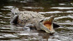 Niño de 10 años muere al ser atrapado por un cocodrilo mientras iba en bote con sus hermanos