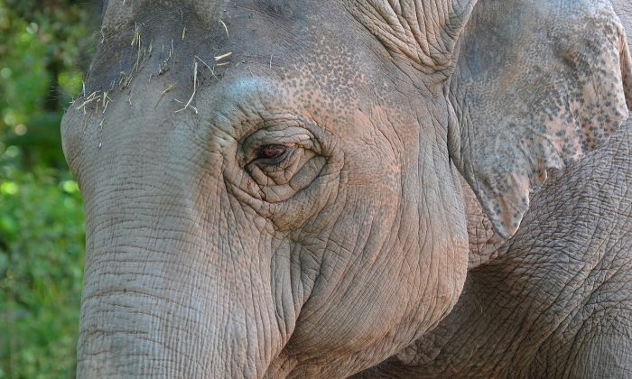 Foto de archivo de un elefante. (Illustration - Shutterstock)
