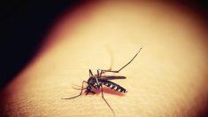 EE.UU.: Incrementa a 8 el número de muertos por brote de virus transmitido por mosquitos