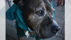 Cachorro arrojado como basura pasó hambre por meses, ahora ofrecen USD 10.000 por su maltratador