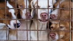 Primer y único estado de EE.UU. donde no sacrifican animales tiene tasa de supervivencia del 92,9%